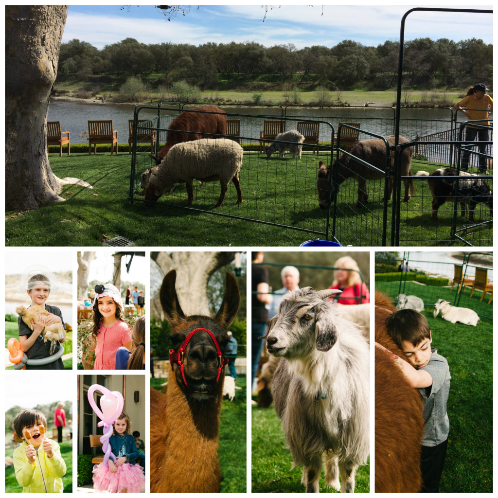 Petting_zoo_For_Kids_Party